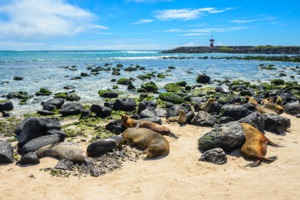 Fur seals on Punta Carola beach, San Cristobal, Galapagos