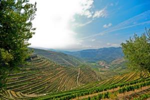 Vineyards near Pinhão, Portugal