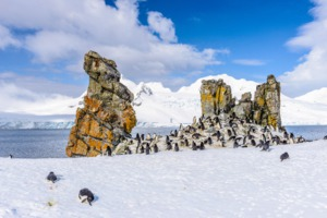 Chinstrap penguins on Half Moon Island, Antarctica