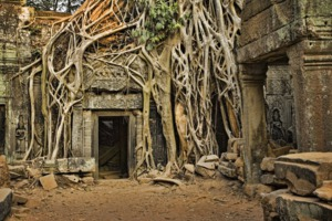Overgrown Ta Prohm temple in Cambodia