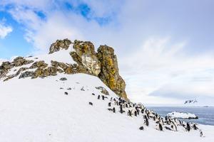 Half Moon Island, South Shetland Islands