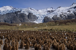 King Penguin colony at Gold Harbour, South Georgia