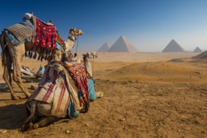 Camels and Pyramids, Cairo, Egypt