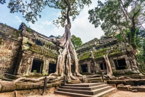 Ta Prohm temple, Angkor
