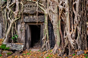 Overgrown doorway at Ta Prohm, Angkor