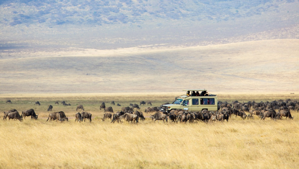 Safari in Ngorongoro, Tanzania