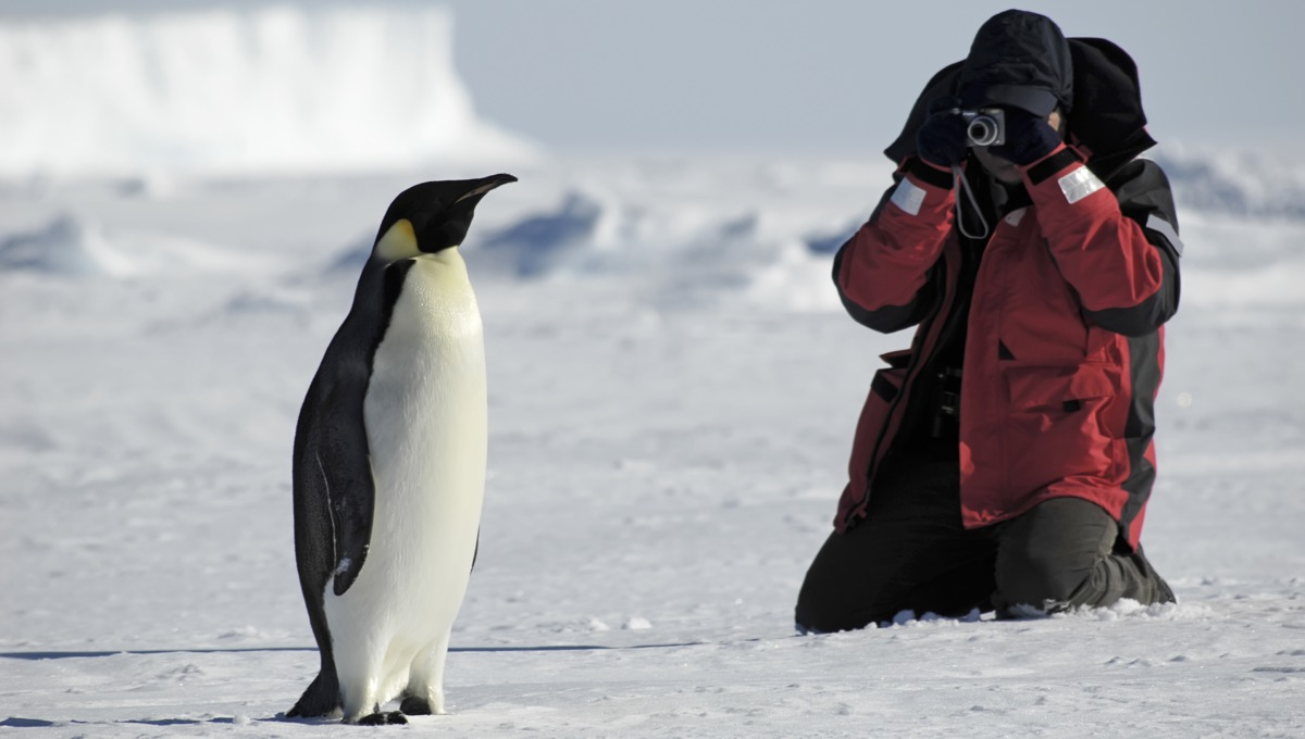 Photographer and penguin in Antarctica