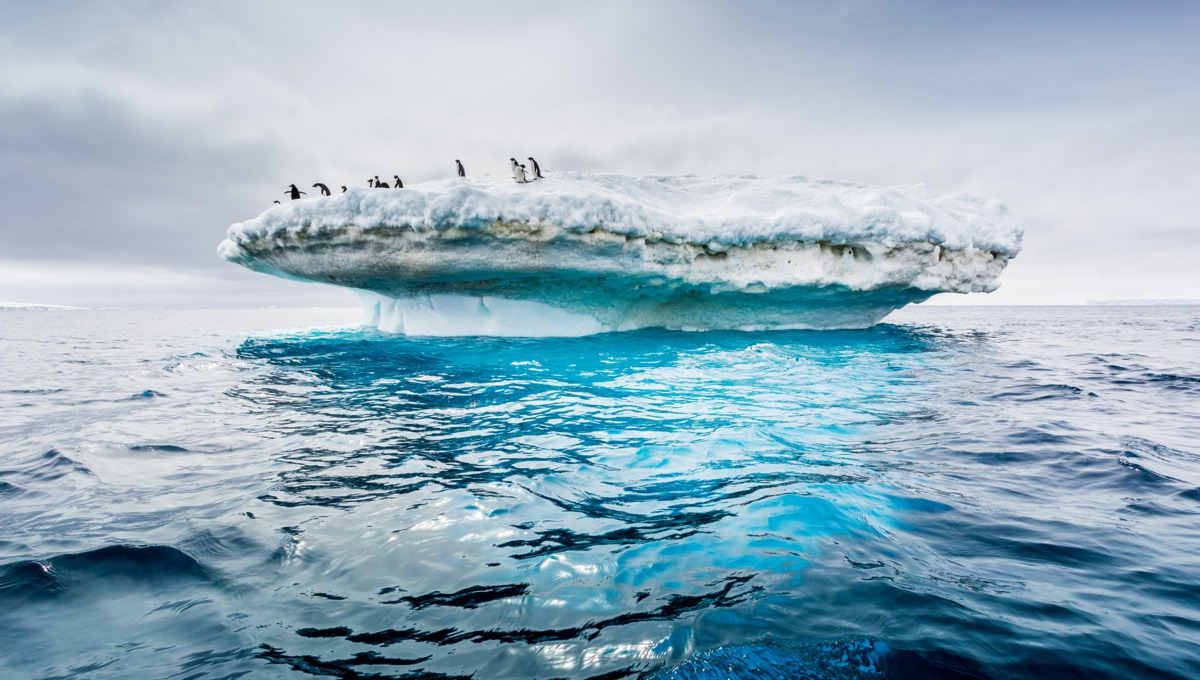 Adelle penguin colony on an iceberg in Antarctica