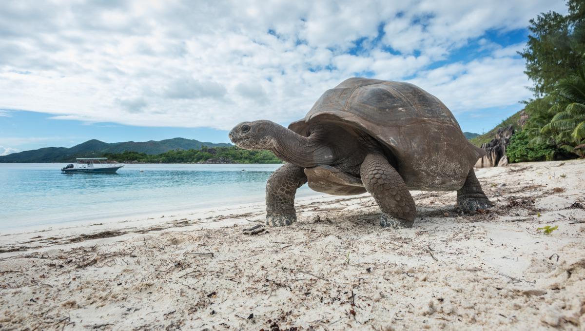 Crystal Esprit Seychelles cruise - Aldabra tortoise