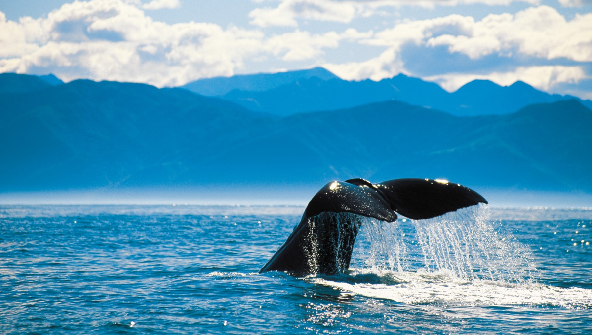Whale tail in Alaska