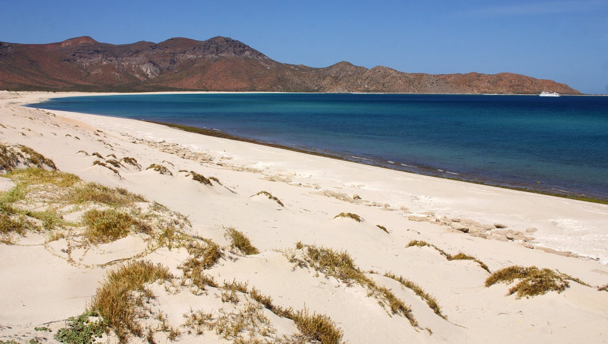 Beach on Espiritu Santo island, Sea of Cortez, Mexico