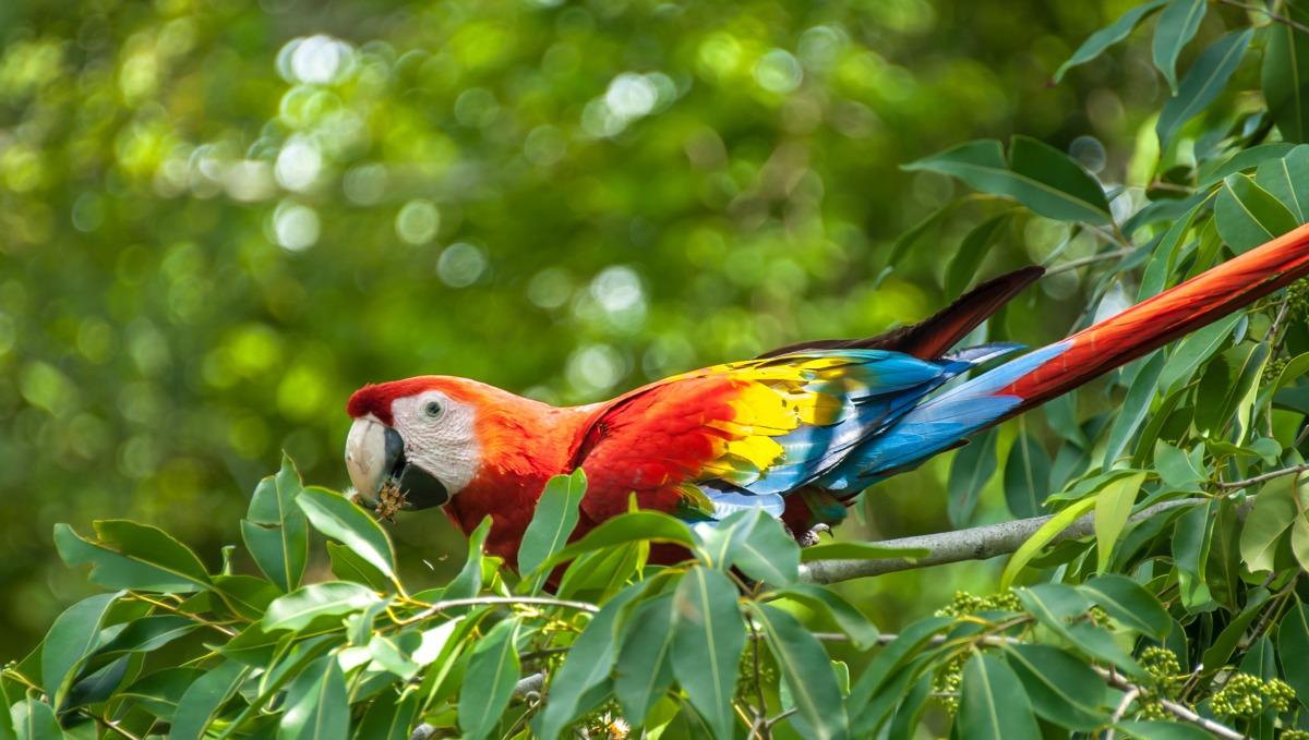 Panama Canal cruises - Fancy macaw