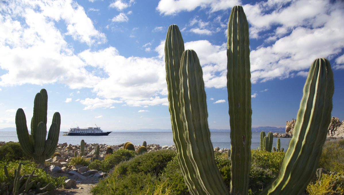 Sea of Cortez expedition cruise guide - UnCruise Adventures