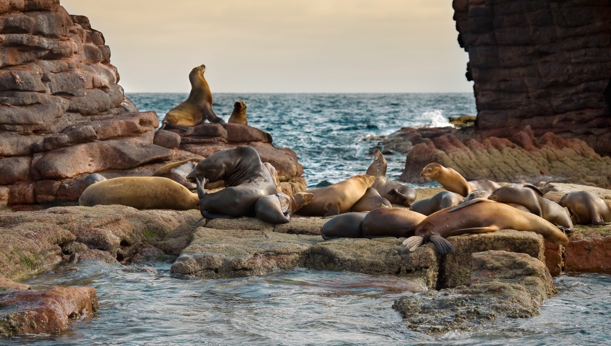 Sea lions in the Sea of Cortez, Mexico