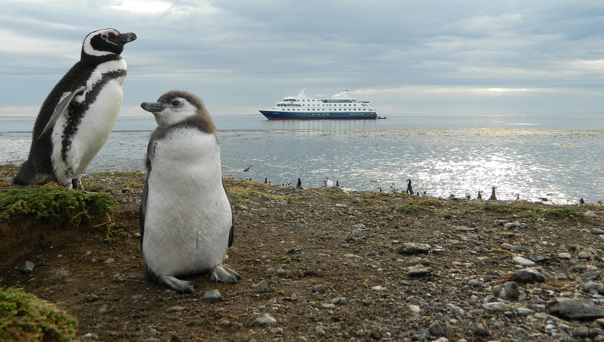 Australis - Patagonia expedition cruises