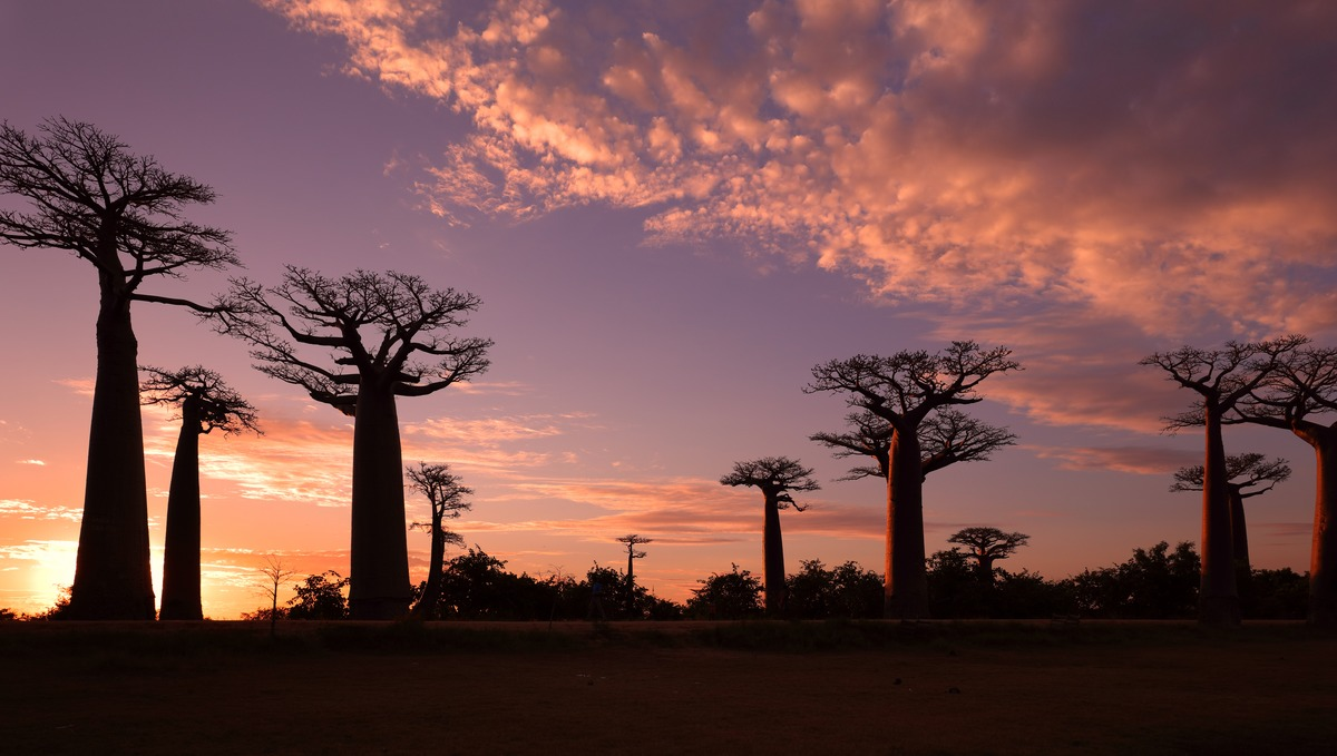 Africa expedition cruises - Avenue of the Baobabs, Madagascar