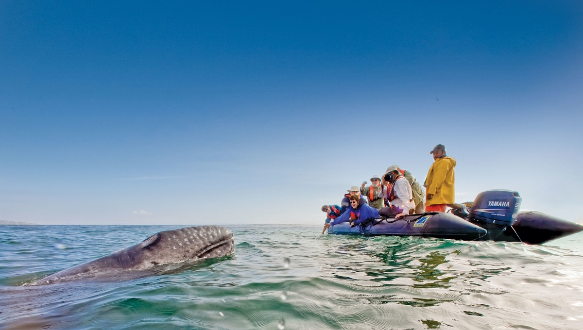 Sea of Cortez expedition cruises - Whale watching