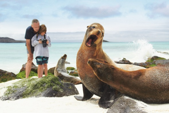 Viewing sea lions on a family holiday to the Galapagos