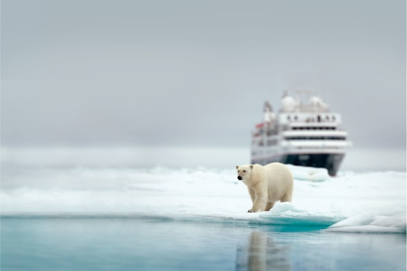 Polar bear in Svalbard on a Silversea Expeditions cruise