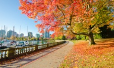 Fall colours in Stanley Park, Vancouver