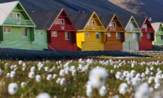 Flowers and colourful houses in Longyearbyen