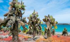 Landscape on South Plaza Island, Galapagos
