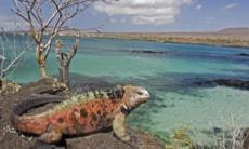Iguana on Floreana island, Galapagos
