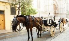 Horse-drawn cart in Palma de Mallorca