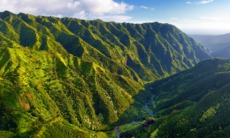 Hawaii luxury cruises - Kauai jungle