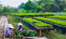Gardeners in Sa Dec, Vietnam