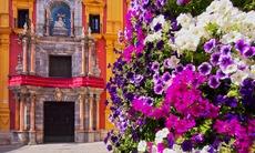 Flowers in Málaga, Spain