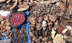 Fetish market in Benin