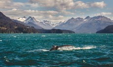 North & Central America expedition cruises - Humpback whale in Alaska