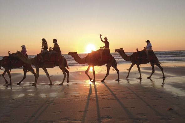 Camel train on Cable Beach, Broome