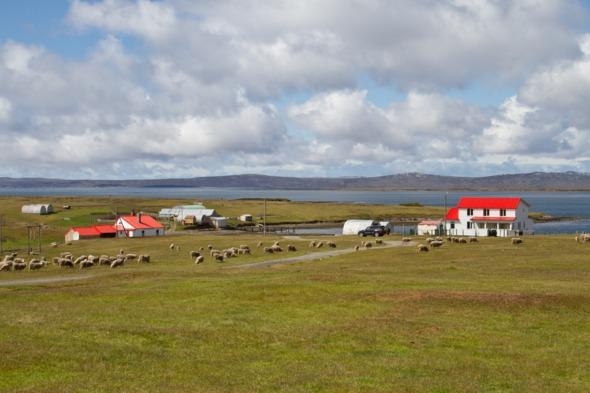 Visiting the Falklands Islands on an Antarctica cruise