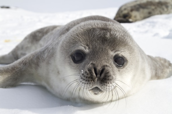 Alternative honeymoon destinations - Antarctica