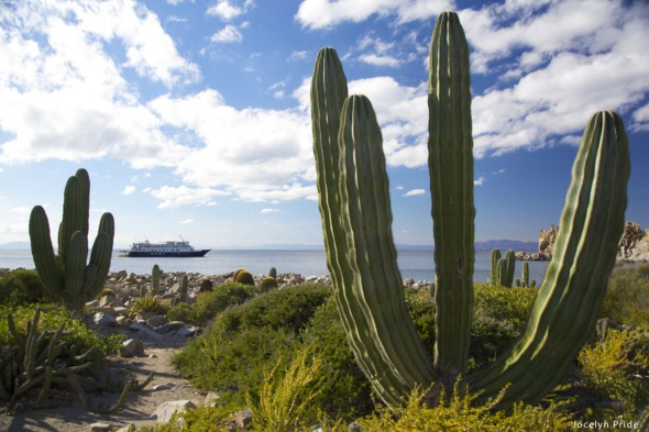 Sea of Cortez expedition cruise guide - UnCruise Adventures