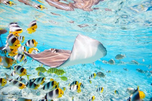 Colourful fish off Bora Bora, French Polynesia