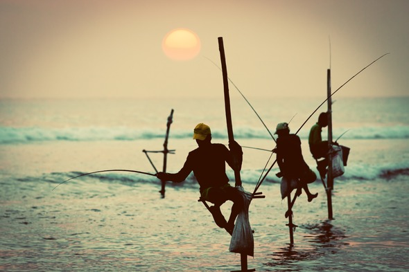 Stilt fishermen near Galle, Sri Lanka