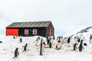 Penguins at Port Lockroy, Antarctica