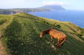 Horse grazing on Batan Island, Philippines