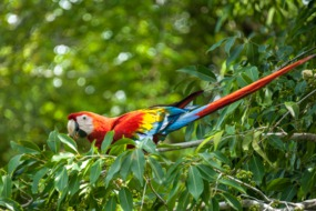 Panama Canal cruises - Fancy macaw