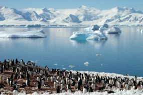 Penguin colony on an expedition cruise to Antarctica