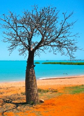 Baobab on the beach in the Kimberley region, Australia