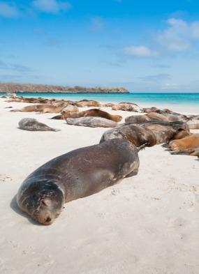 Sea lions on Española island, Galapagos