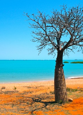 Australia expedition cruises - Baobab on the Kimberley coast