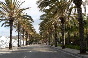 Palm-lined street, Los Angeles