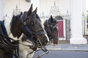 Horse-drawn carriage, Charleston